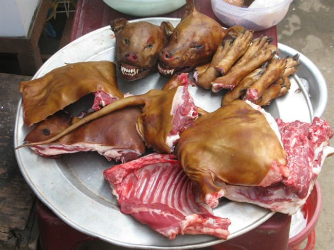China Dog Meat to hit South African market in the middle of June.